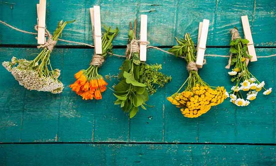 Rimedi verdi che aiutano a difendersi dalle malattie dell'autunno