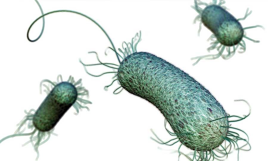 Infezioni nosocomiali e resistenza antibiotica